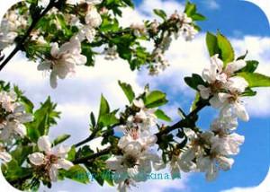 _правила посадки плодовых деревьев