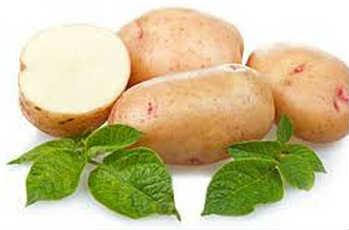 _подготовка картофеля к посадке