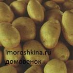 _сорта картофеля