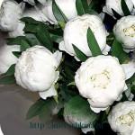 2012-11-12_1854541_mini