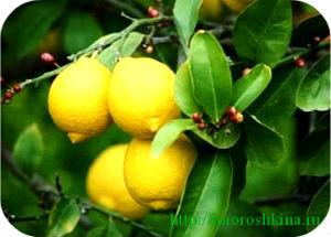 Как избавиться от мозолей_лимоном