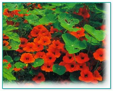 2012-10-25_155552_mini