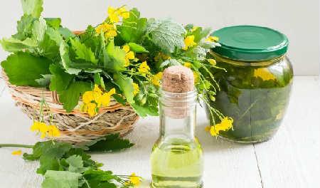 Чистотел: лечебные свойства и противопоказания, рецепты_от бородавок