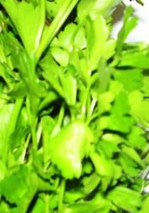 _выращивание петрушки