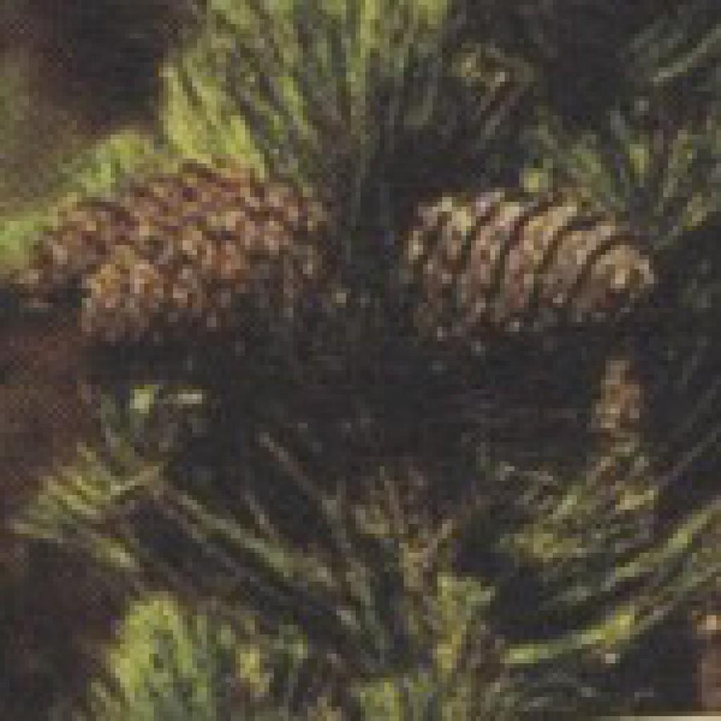 Рецепт раствор калия перманганата калия