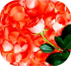 Применение лепестков роз_свойства