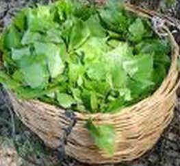 Свойства березовых листьев-корзинка