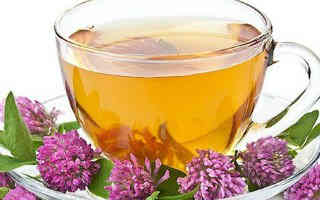 _чашка чая с красным клевером