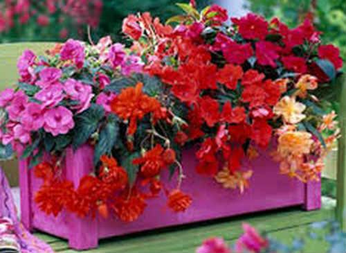 Купить цветы для балкона солнечная сторона доставка цветов санкт-петербург лилии