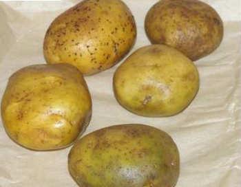 Вкусная окрошка_ вареный картофель