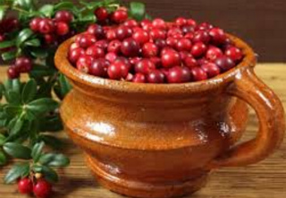 Толокнянка полезные свойства, противопоказания_ ягоды