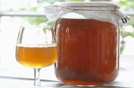 Чайный гриб: олезные свойства и противопоказания, отзывы_для похудения
