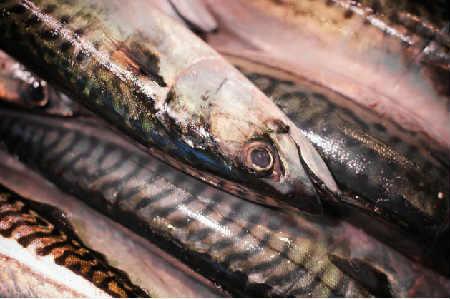 Скумбрия маринованная в домашних условиях, очень вкусная_секреты вкусной рыбы