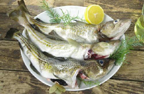 Рыбные котлеты из трески рецепт очень вкусно_ как выглядит треска