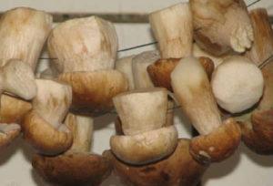 Как сушить грибы в домашних условиях