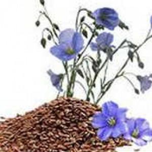 Лечебные свойства льняного семени