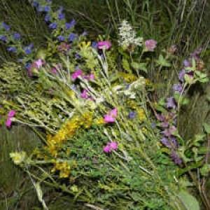 целебные травы-цветки