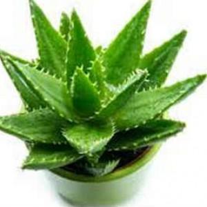 Полезные комнатные растения_для человека