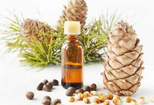 Кедровое масло-лечебные свойства и противопоказания_ из чего делают