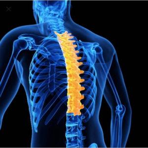 Показания к проведению МРТ грудного отдела позвоночника